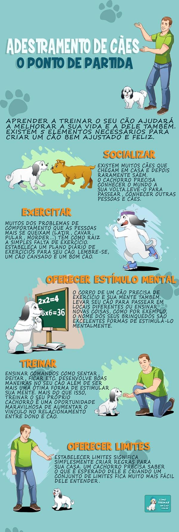 Como adestrar um cachorro -  infografo
