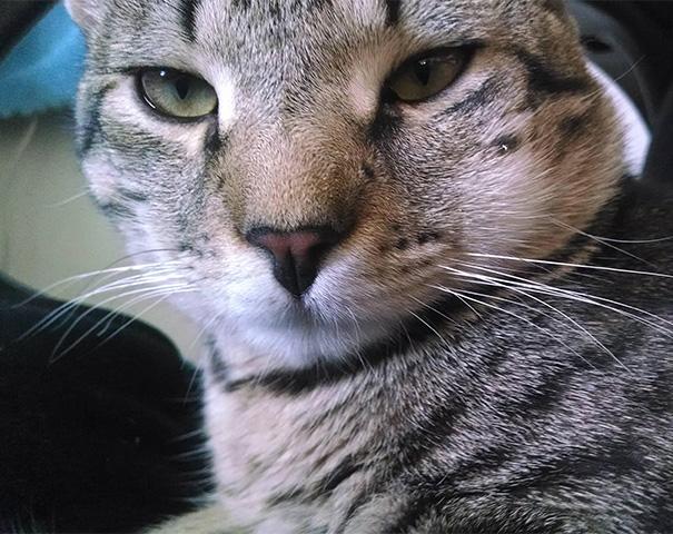 gatos-picados-por-abelhas (11)