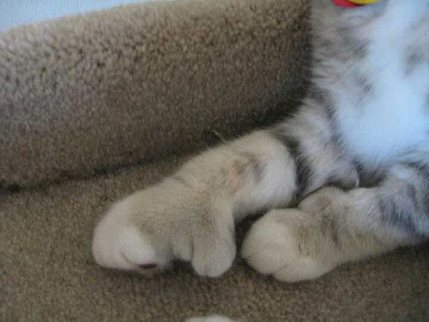 gatos-picados-por-abelhas (13)