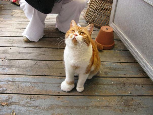 gatos-picados-por-abelhas (15)