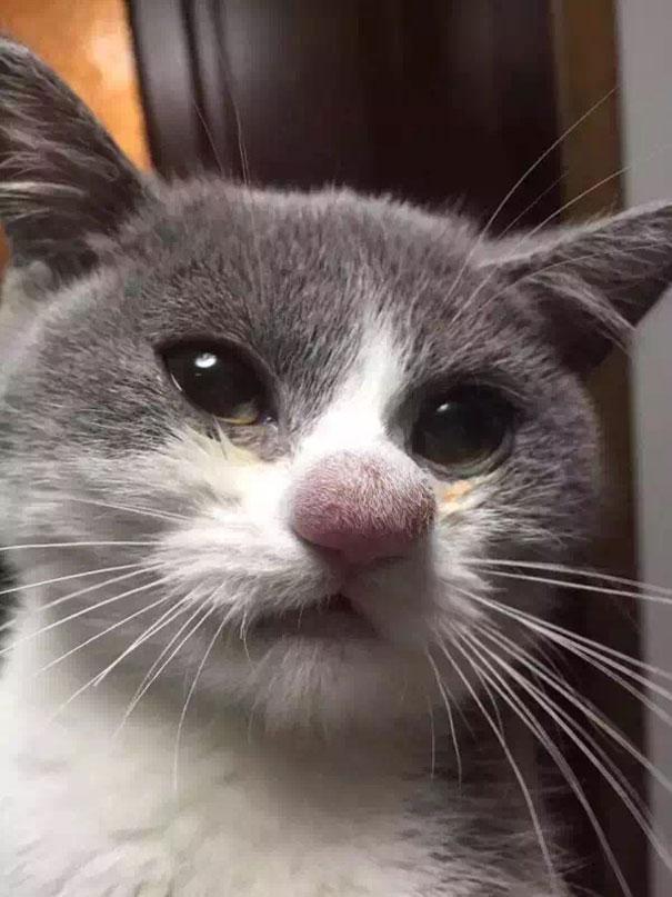 gatos-picados-por-abelhas (16)