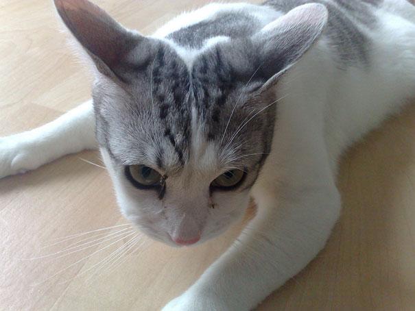 gatos-picados-por-abelhas (24)