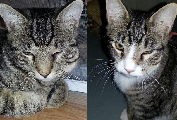 gatos-picados-por-abelhas (4)