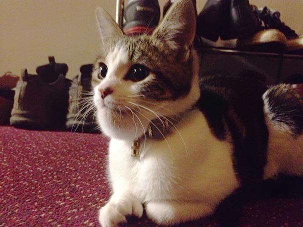 gatos-picados-por-abelhas (6)