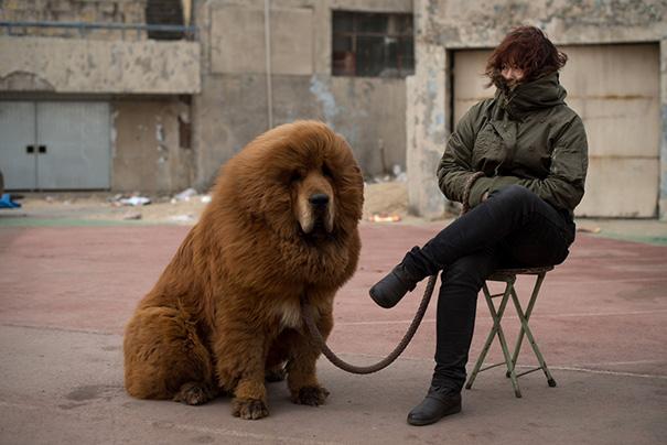cachorros-que-se-parecem-com-ursos (6)