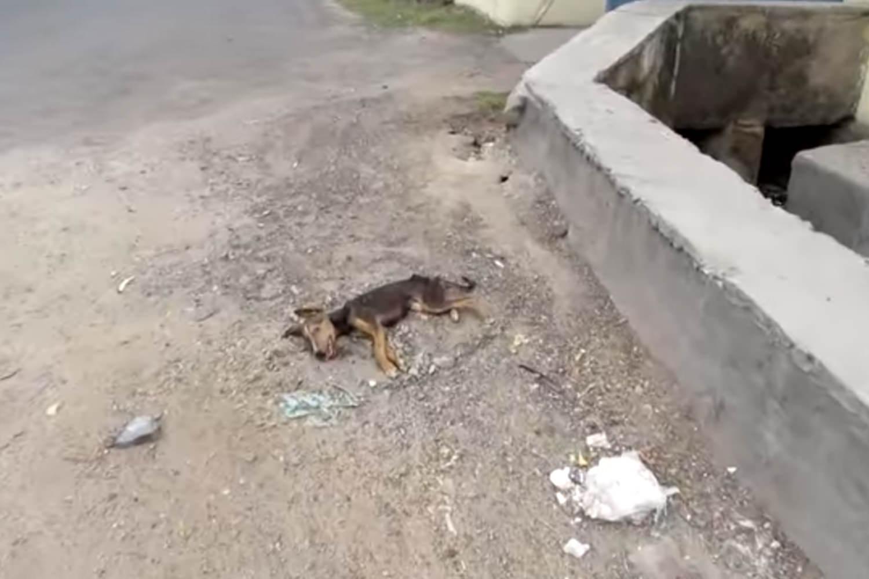 cadela-gravemente-doente-abana-o-rabo-ao-ver-equipe-de-resgate-1_mini