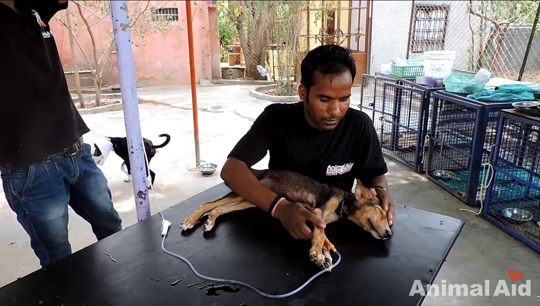 cadela-gravemente-doente-abana-o-rabo-ao-ver-equipe-de-resgate (3)