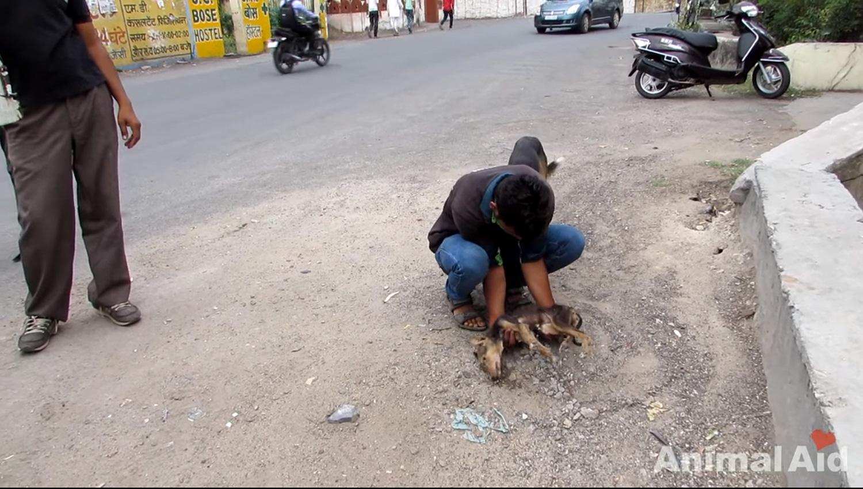 cadela-gravemente-doente-abana-o-rabo-ao-ver-equipe-de-resgate (4)