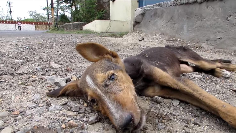 cadela-gravemente-doente-abana-o-rabo-ao-ver-equipe-de-resgate (5)
