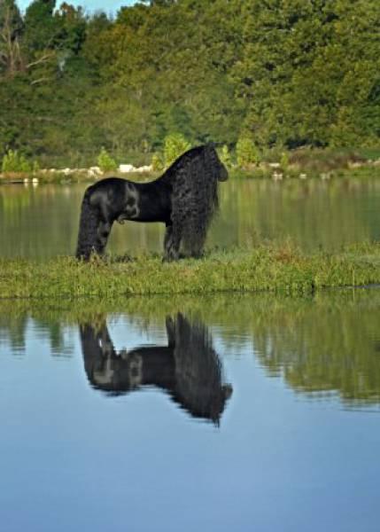 cavalo_mais_bonito_do_Mundo (13)