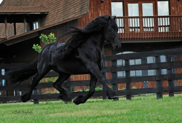 cavalo_mais_bonito_do_Mundo (17)
