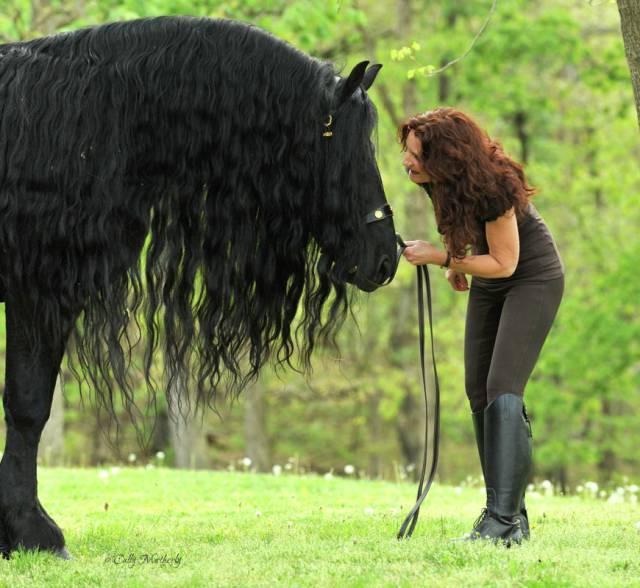 cavalo_mais_bonito_do_Mundo (2)