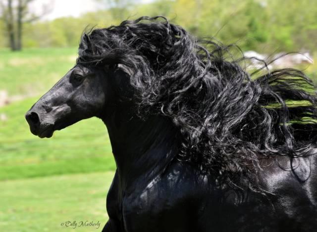cavalo_mais_bonito_do_Mundo (6)