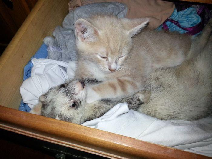 Amizade entre Gatinho e Furões (14)
