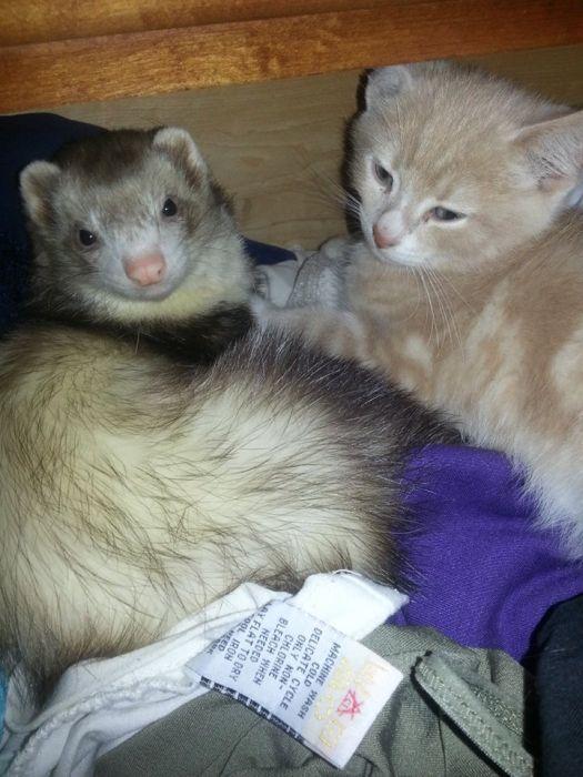 Amizade entre Gatinho e Furões (15)