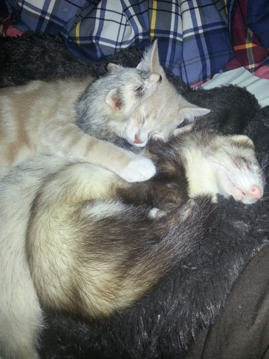 Amizade entre Gatinho e Furões (22)