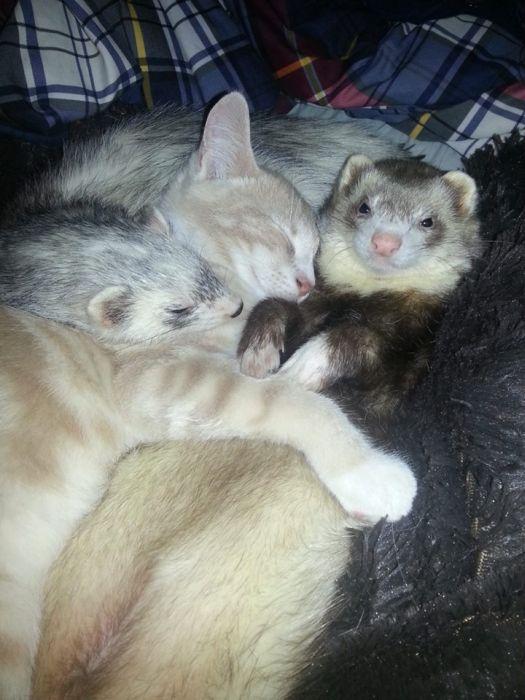 Amizade entre Gatinho e Furões (24)