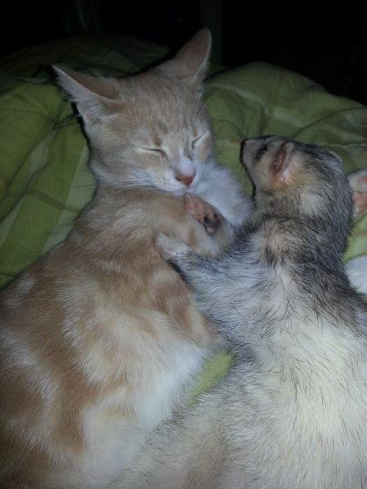 Amizade entre Gatinho e Furões (28)