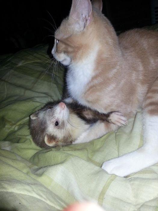 Amizade entre Gatinho e Furões (29)
