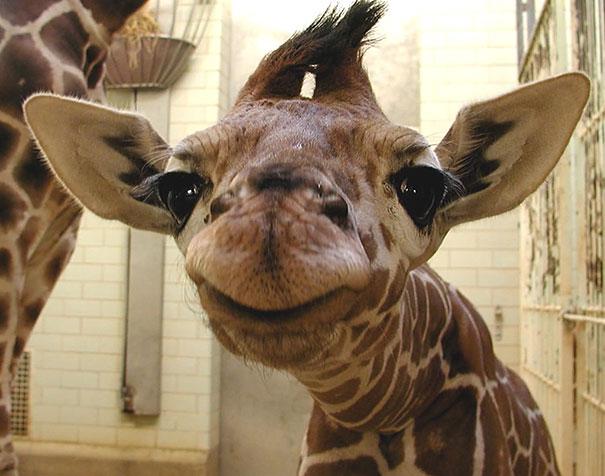 Animais felizes que vão fazer você sorrir (11)