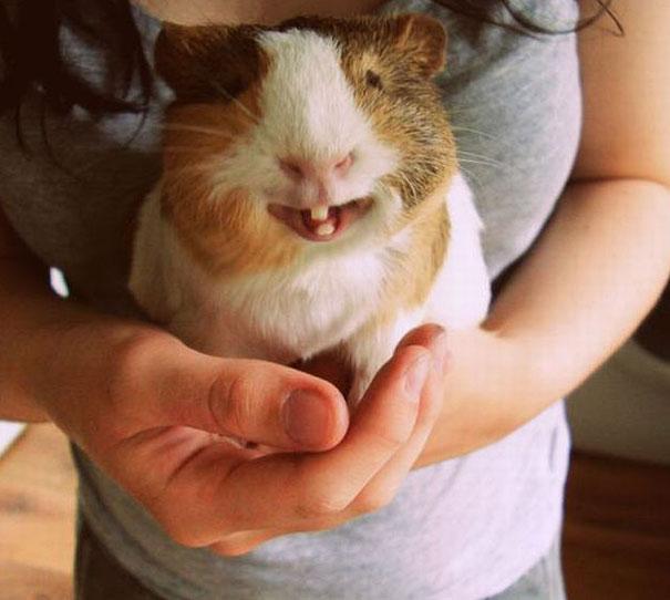 Animais felizes que vão fazer você sorrir (12)