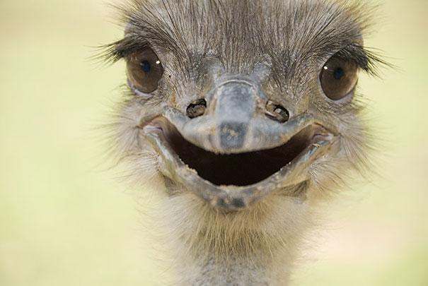 Animais felizes que vão fazer você sorrir (14)