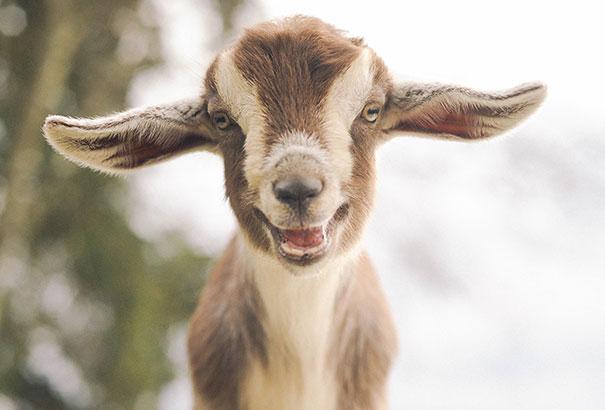 Animais felizes que vão fazer você sorrir (4)