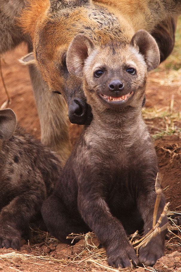 Animais felizes que vão fazer você sorrir (9)