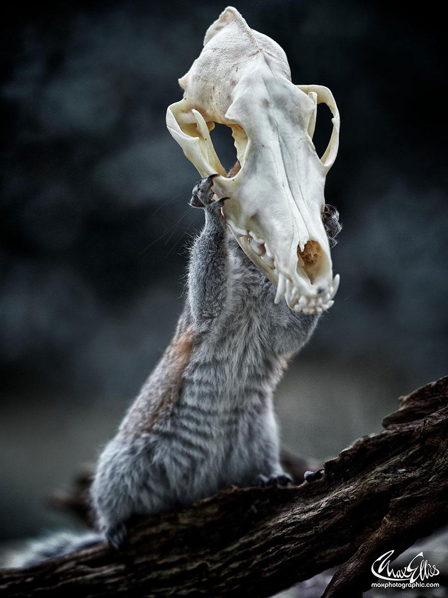 Fotos adoráveis de esquilos (1)