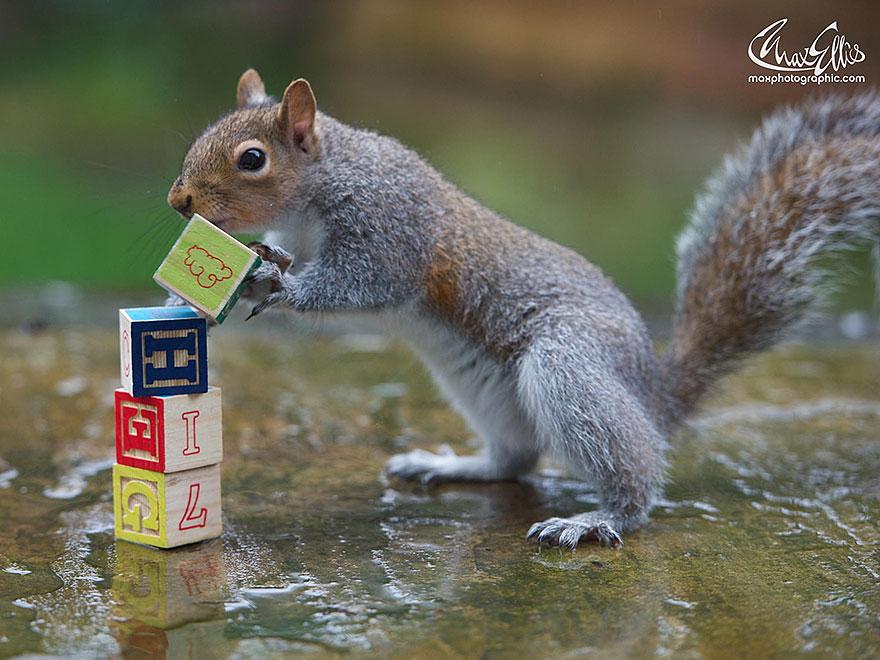 Fotos adoráveis de esquilos (10)