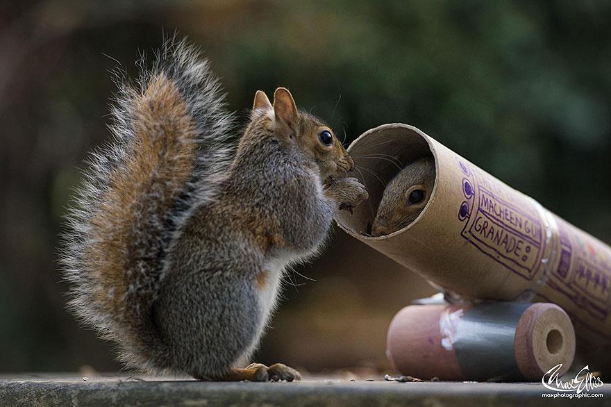 Fotos adoráveis de esquilos (11)