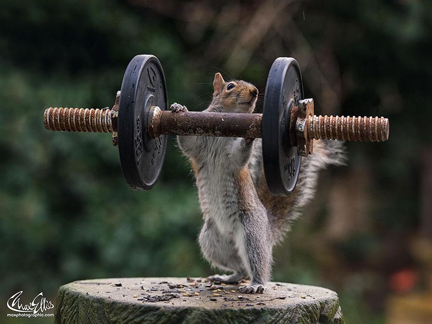 Fotos adoráveis de esquilos (12)