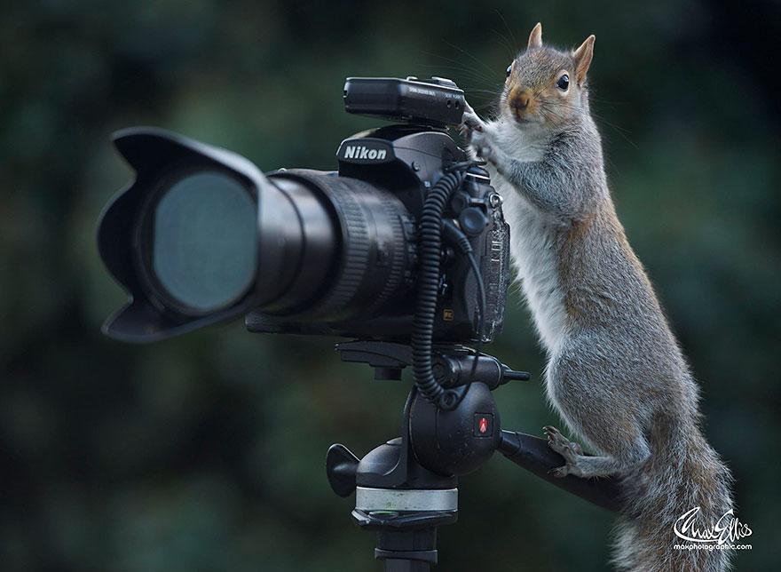 Fotos adoráveis de esquilos (14)