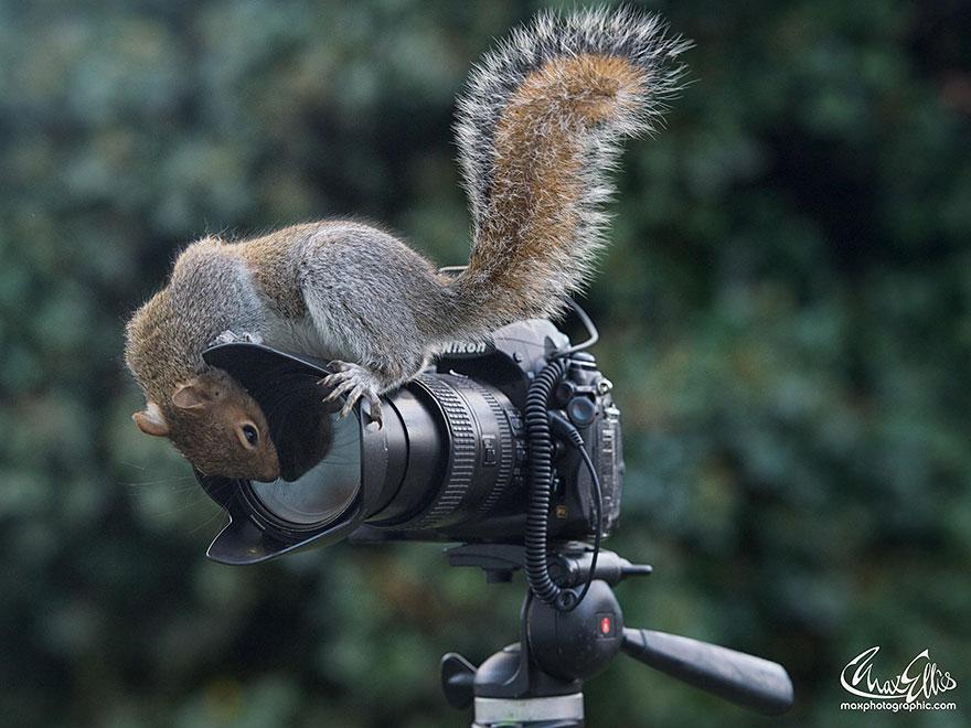 Fotos adoráveis de esquilos (15)