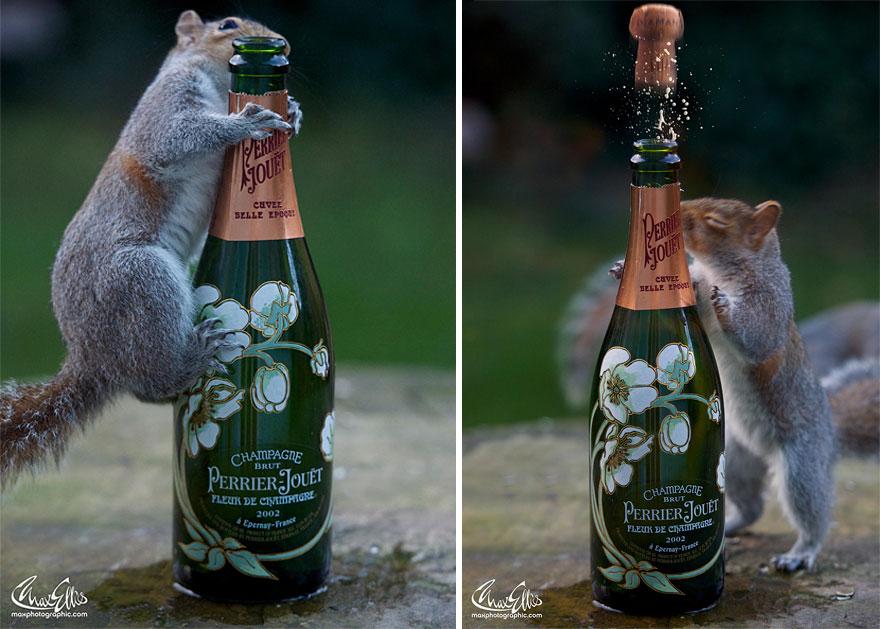 Fotos adoráveis de esquilos (16)