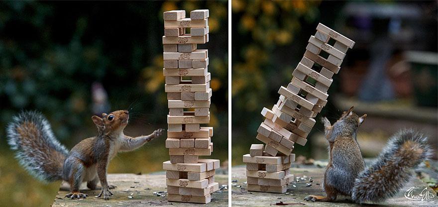 Fotos adoráveis de esquilos (17)