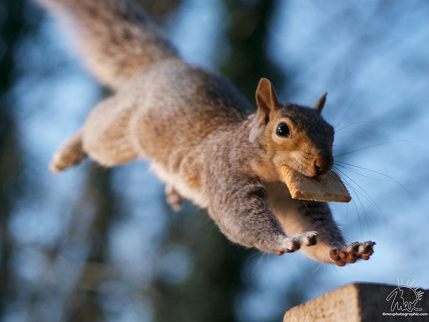 Fotos adoráveis de esquilos (19)