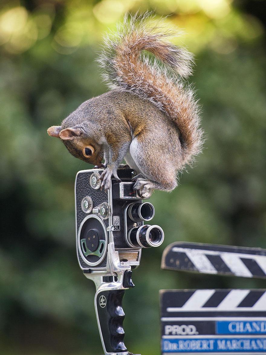 Fotos adoráveis de esquilos (2)