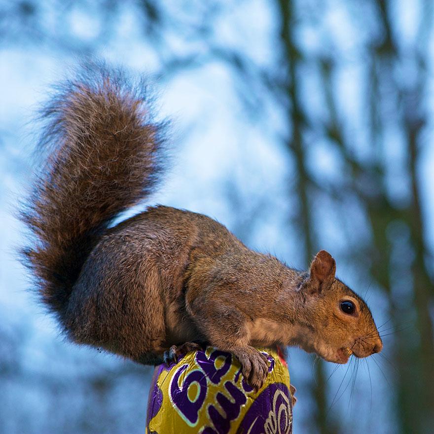 Fotos adoráveis de esquilos (20)
