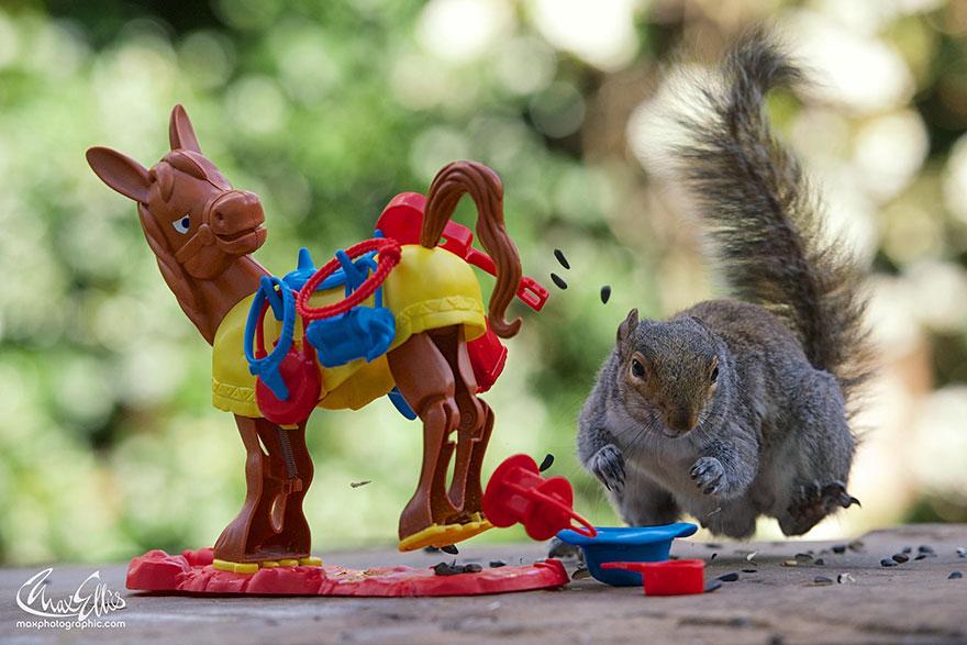 Fotos adoráveis de esquilos (3)