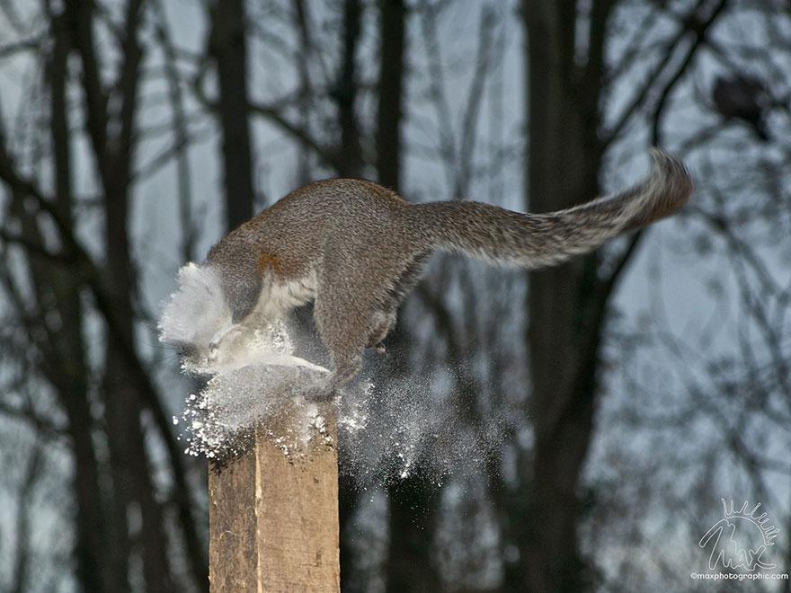 Fotos adoráveis de esquilos (4)