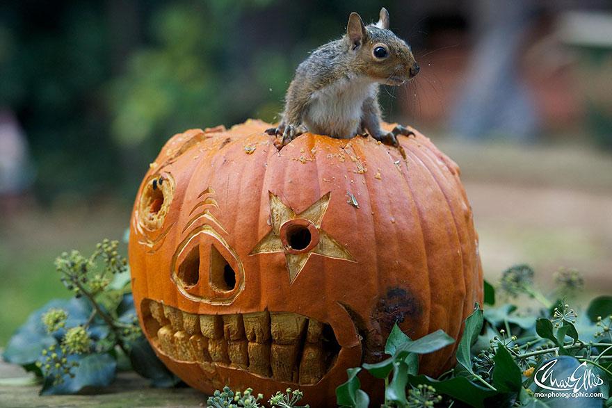 Fotos adoráveis de esquilos (6)