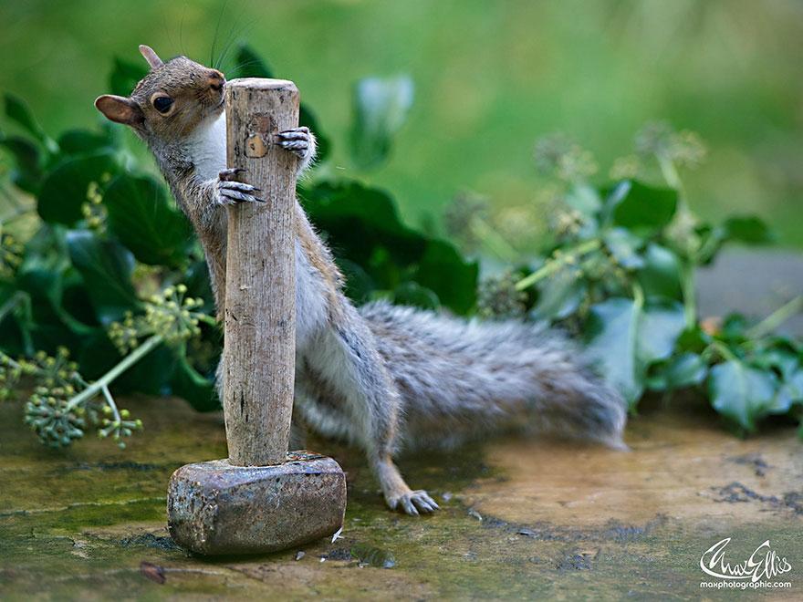 Fotos adoráveis de esquilos (7)