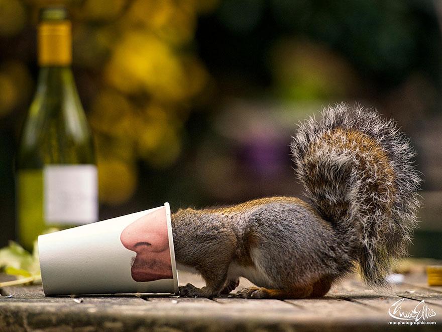 Fotos adoráveis de esquilos (8)