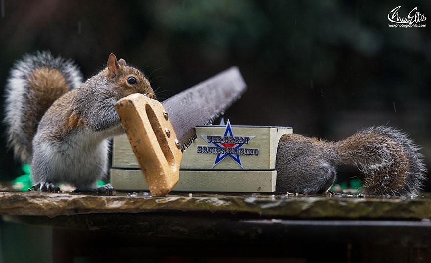 Fotos adoráveis de esquilos (9)
