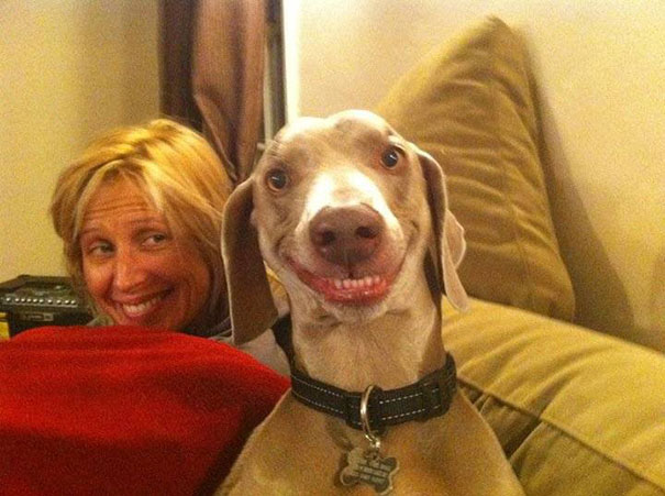 Fotos de animais hilariamente desajeitados (12)