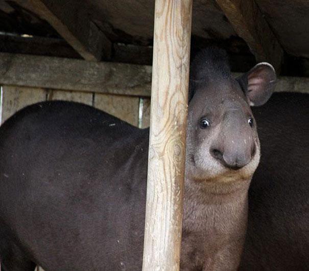 Fotos de animais hilariamente desajeitados (14)