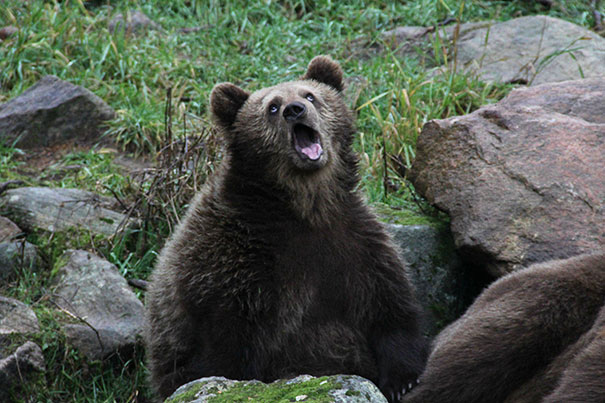 Fotos de animais hilariamente desajeitados (15)