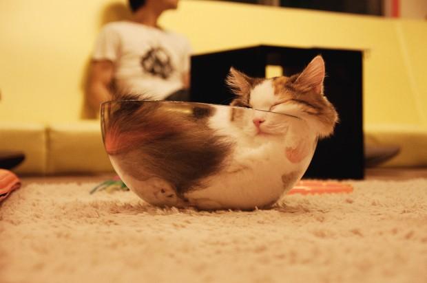 Gatos flexíveis quem cabem em qualquer lugar (1)