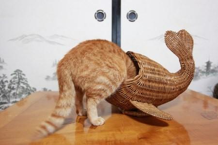 Gatos flexíveis quem cabem em qualquer lugar (16)